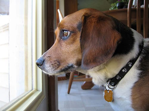 Perro esperando a su dueño
