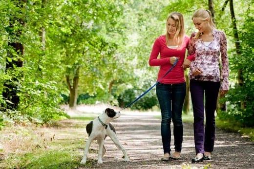 Perro paseando por el parque junto a sus dueñas