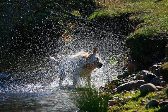 El miedo al agua