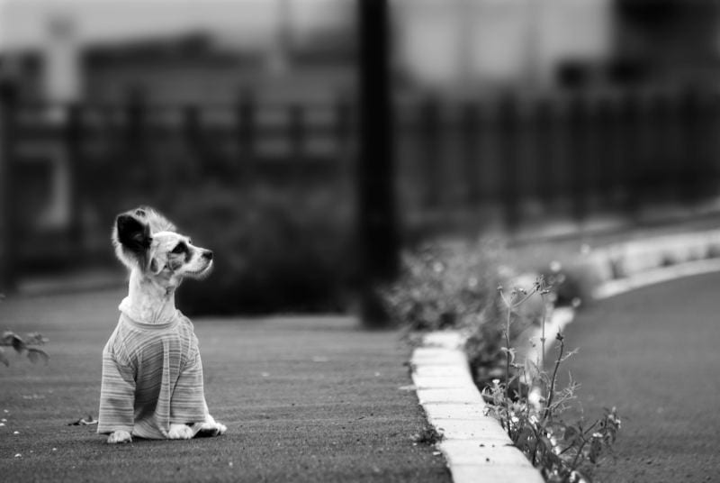 Perro abandonado en la acera publica