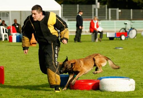 Perro en prueba de Mondioring