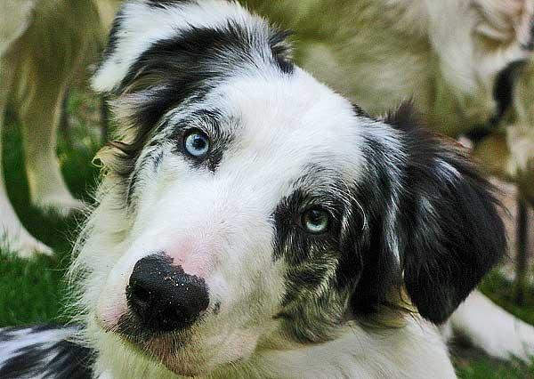 Antipulgas con bioactivacion para perros