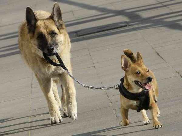 Perros paseando por la acera