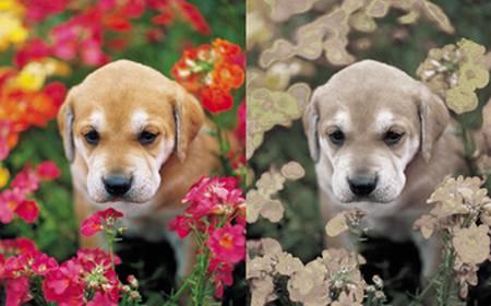 Los perros no ven en colores, sino en tonos de grises