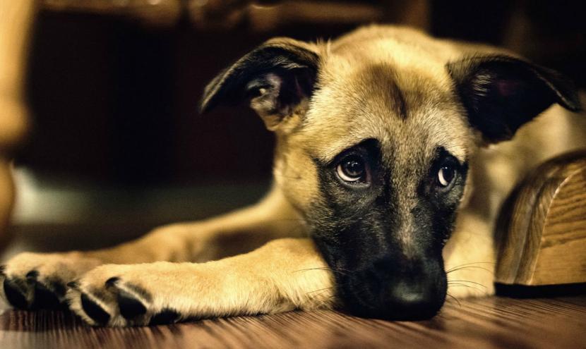 Resultado de imagen para perro triste