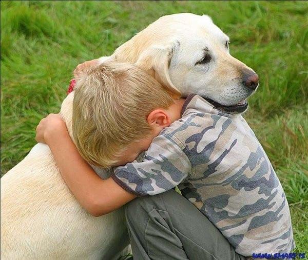 Nuevo sitio web para la adopción de mascotas