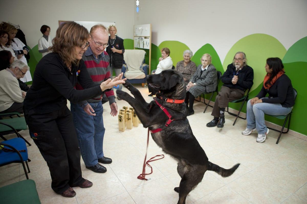 Sesión de caninoterapia con pacientes