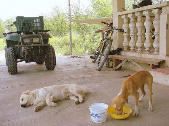 Nombres de alimentos caninos