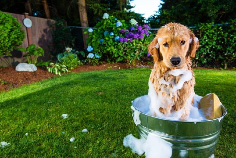 limpiar perra pequeño