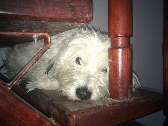 perro deprimido