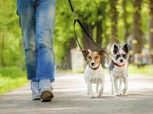 Persona paseando a dos perros