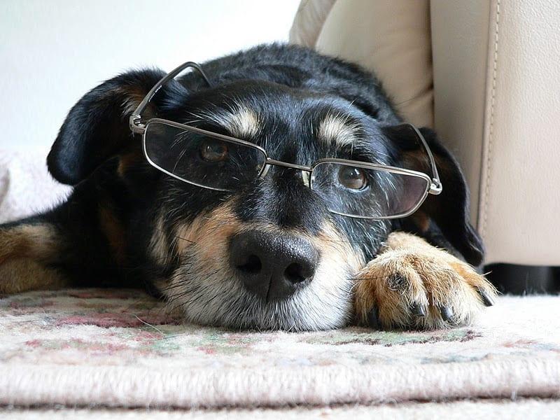 Problemas oculares en los perros