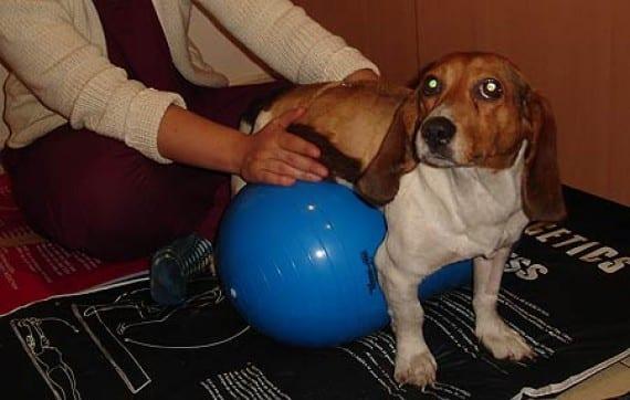 rehabilitacion veterinaria