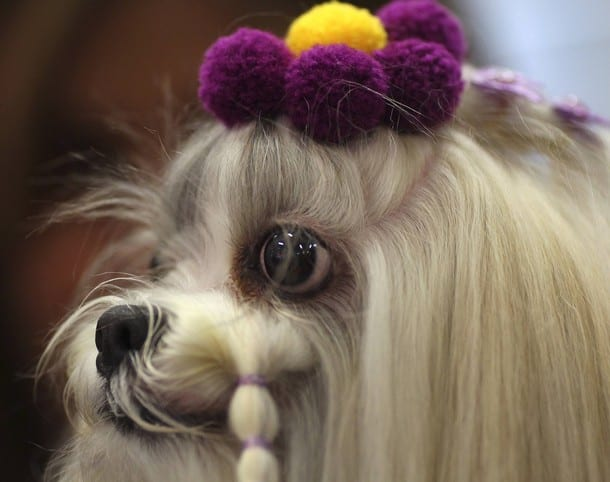 Modelo canina en la Sao Paulo Fashion Pet