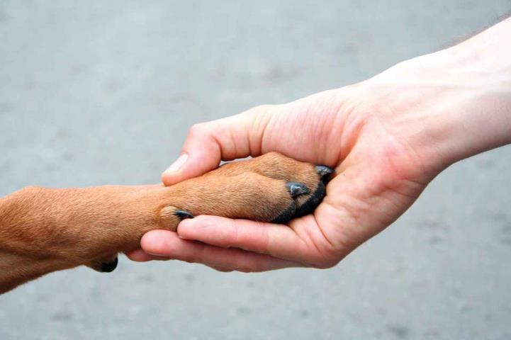 Persona dándole la mano a un perro