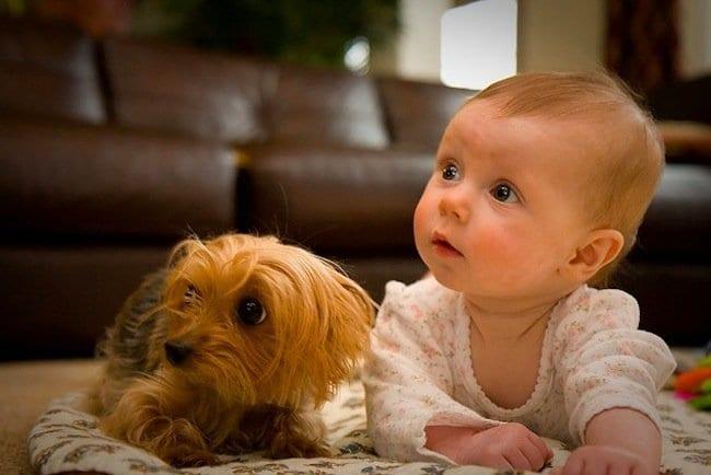 Perro acompañando a una bebé