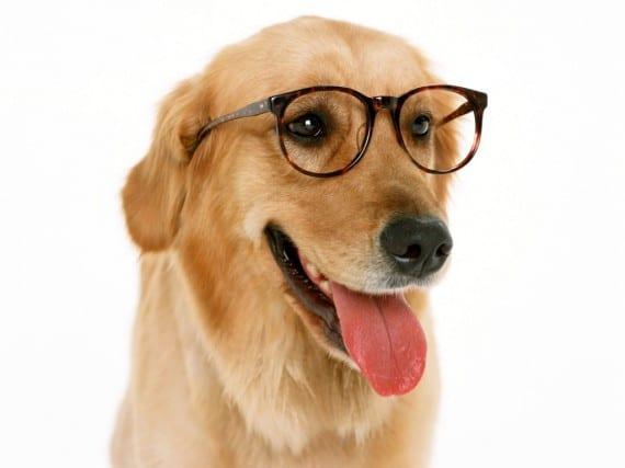 perro con memoria