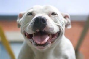 Perros que sonríen