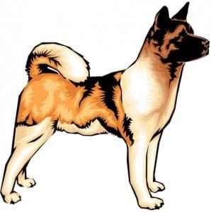 Evolucion del perro