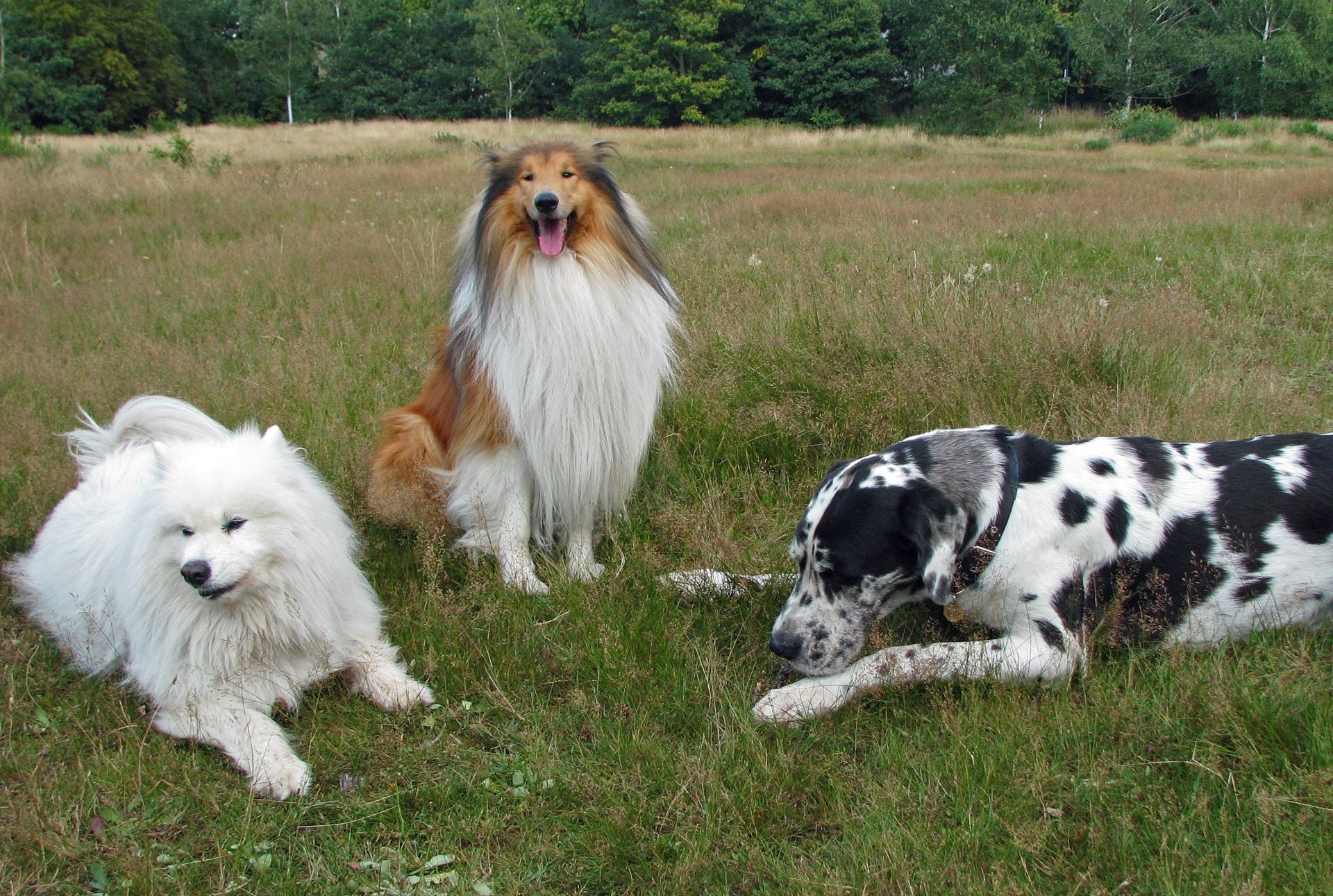 Los perros han evolucionado para ser animales sociales
