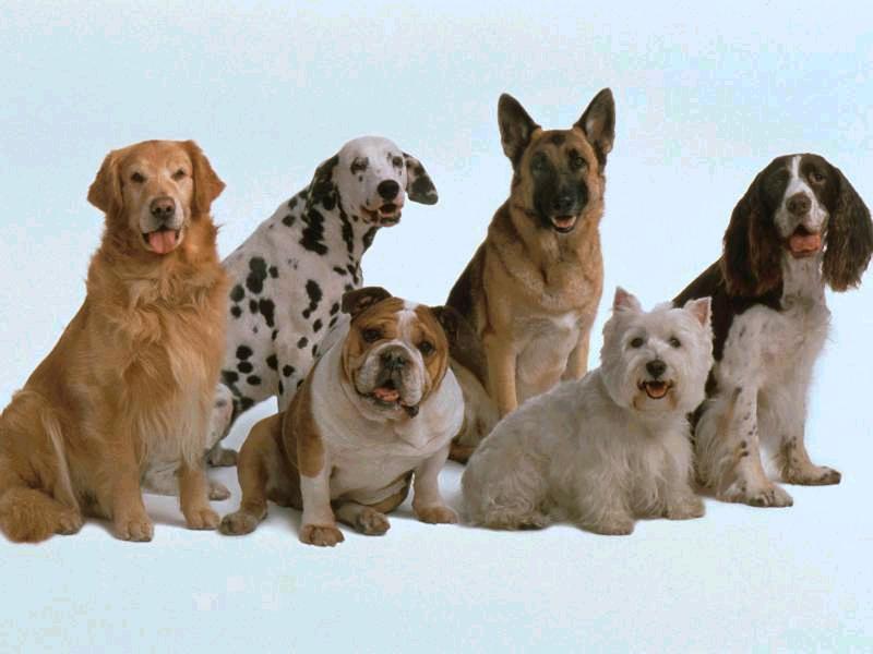 Qué hacer si se tienen muchos perros