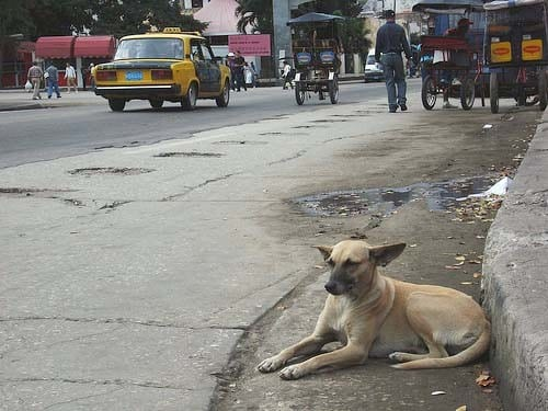 tuberculosis en perros