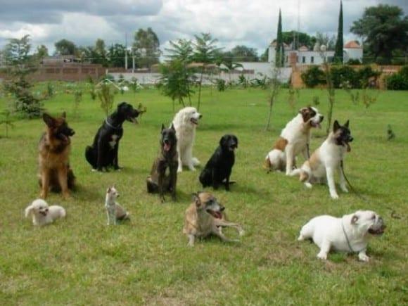 perros en grupo