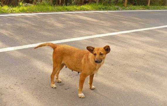 Mairena crea un blog para perros abandonados