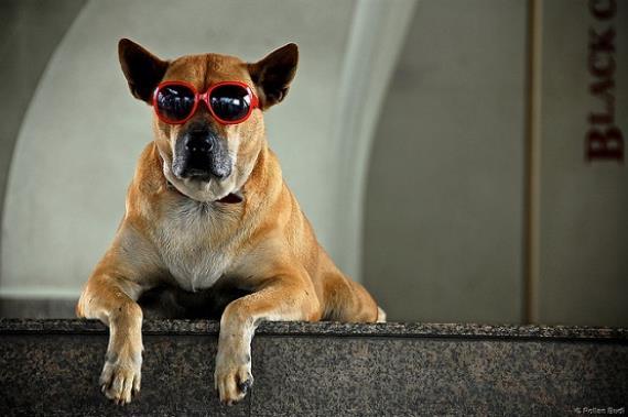 Consejos para viajar con el perro