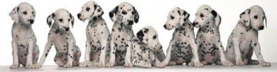 Higiene y limpieza de los perros que viven n grupo