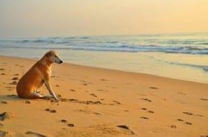Playas que admiten perros en Galicia