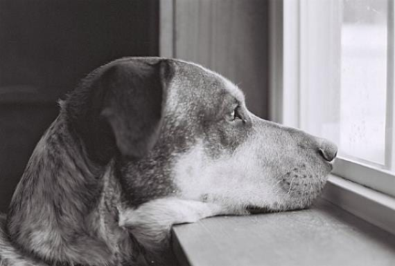 Perros para pisos