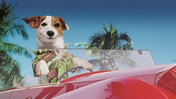 Pancho, el perro más rico de España