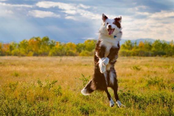 Perro feliz