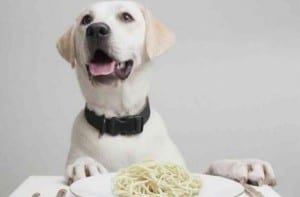Comederos para perros