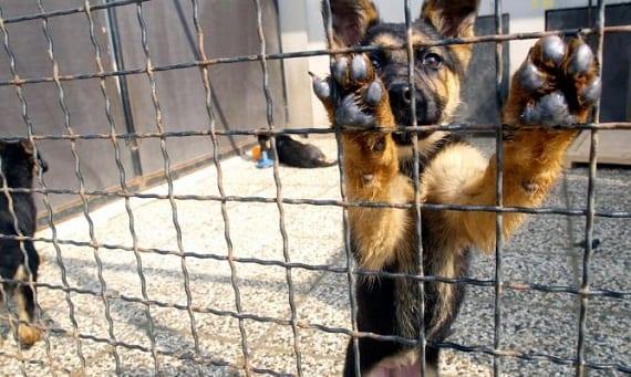 cómo encontrar un buen adoptante para un perro