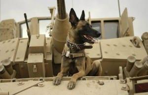 Perros militares