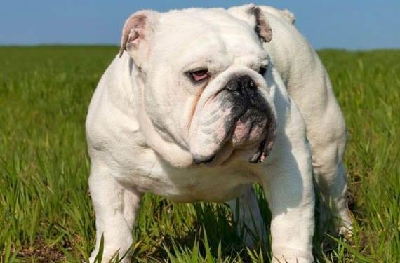 Alimentación en perros de piel sensible