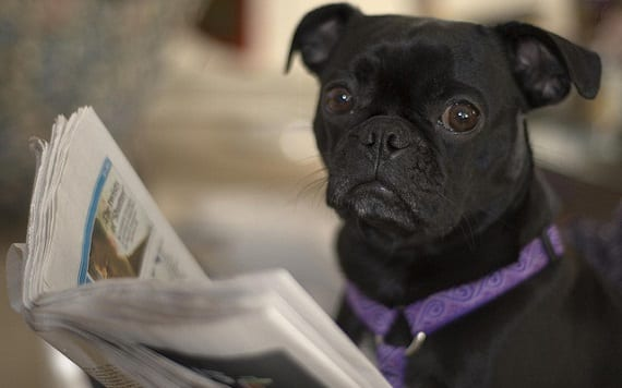 Curiosidades de la inteligencia canina