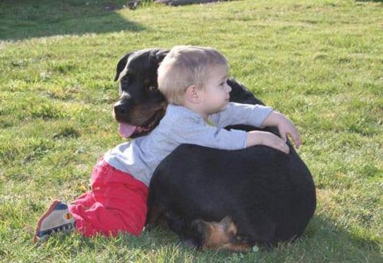 Las mejores razas para niños