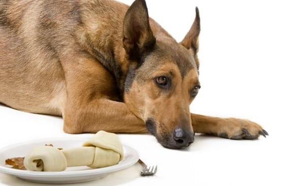 Falta de apetito en perros