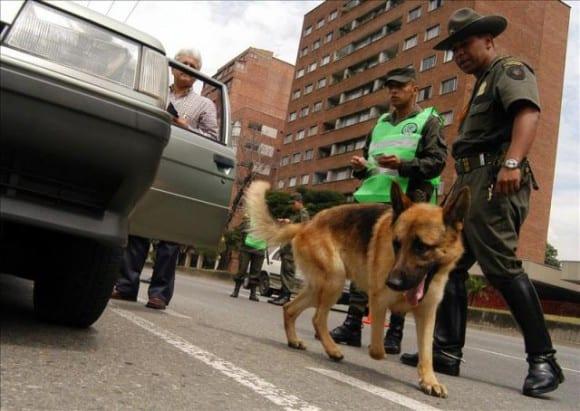 Los perros colombianos deben trabajar