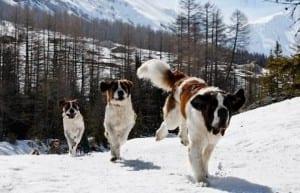 viajar a la nieve con tu perro