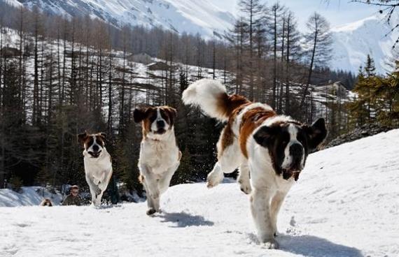 Viajar a la nieve con tu mascota - Alojamiento en la nieve ...