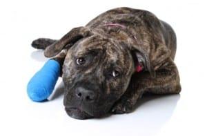 Curar heridas de perros