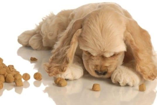 Evitar las indigestiones en el perro