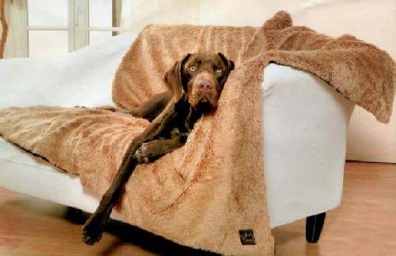 Cómo evitar que el perro suba al sofá