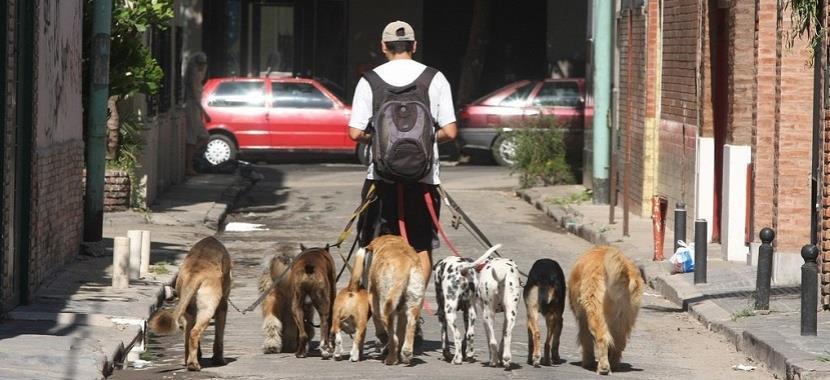 Disfrutar del paseo con el perro
