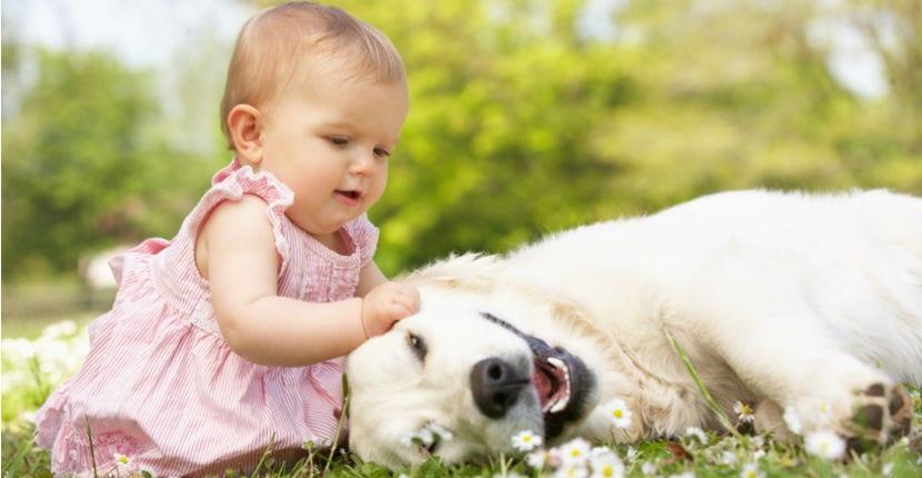 Bebé con un Golden Retriever