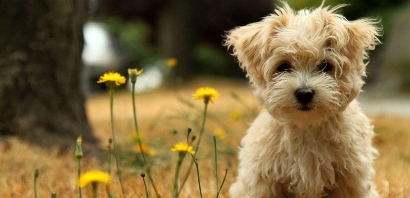 Cachorro en el campo.